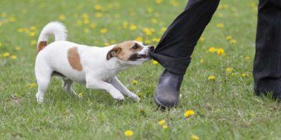 dog-bite-lawyer-danville-illinois